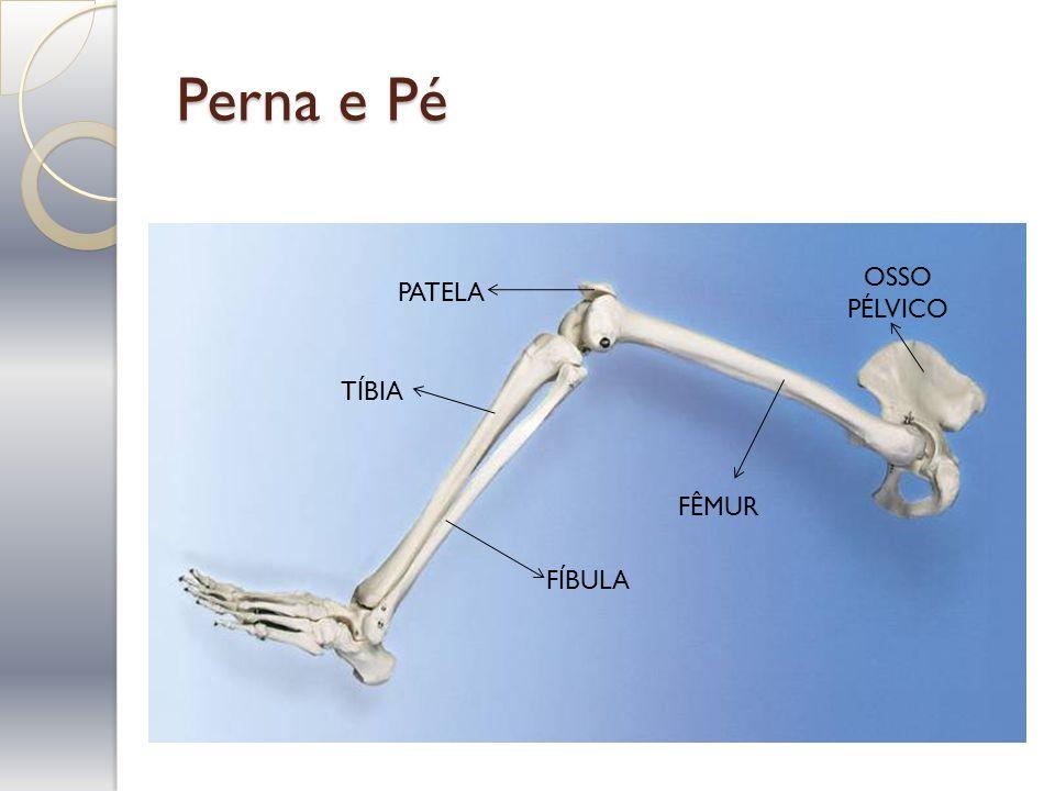 Prof murilo c s ferreira ppt video online carregar for Esterno e um osso irregular