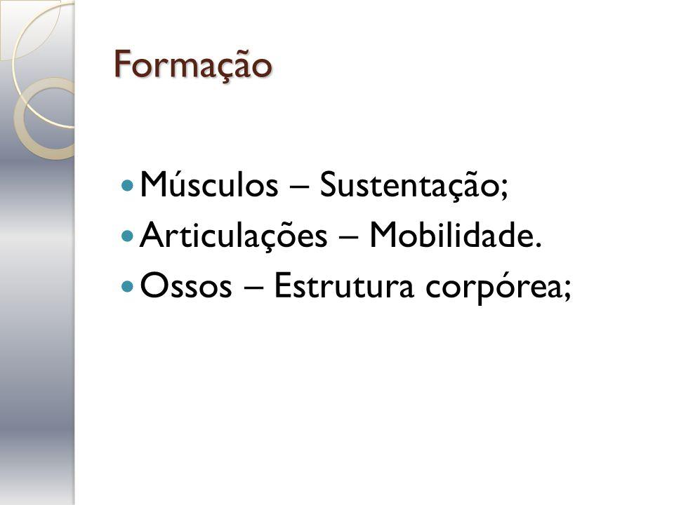 Formação Músculos – Sustentação; Articulações – Mobilidade.