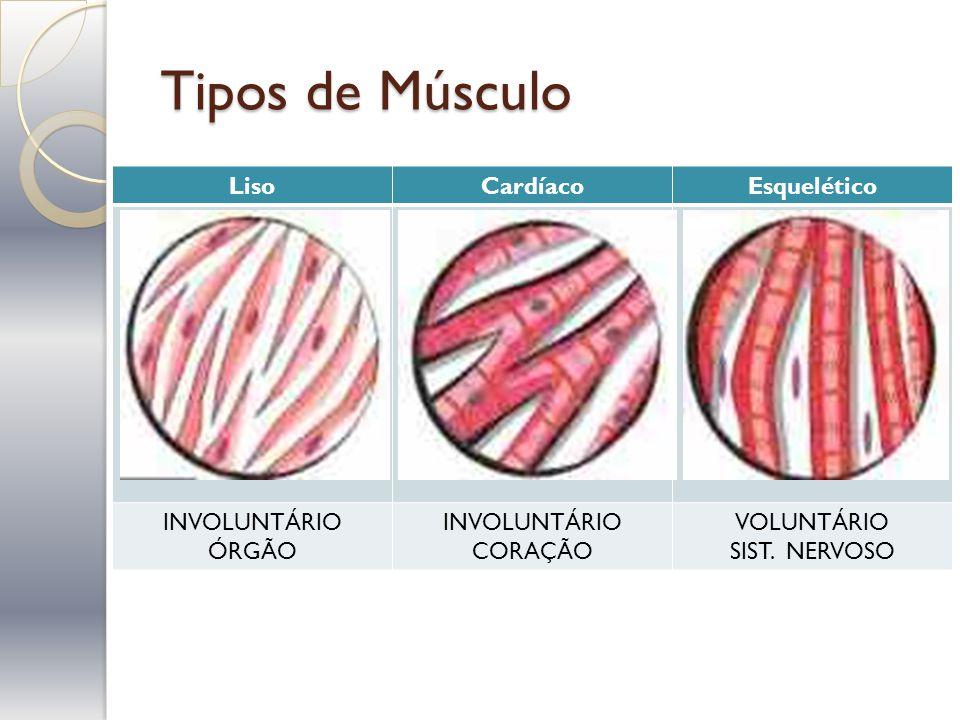 Tipos de Músculo Liso Cardíaco Esquelético INVOLUNTÁRIO ÓRGÃO CORAÇÃO