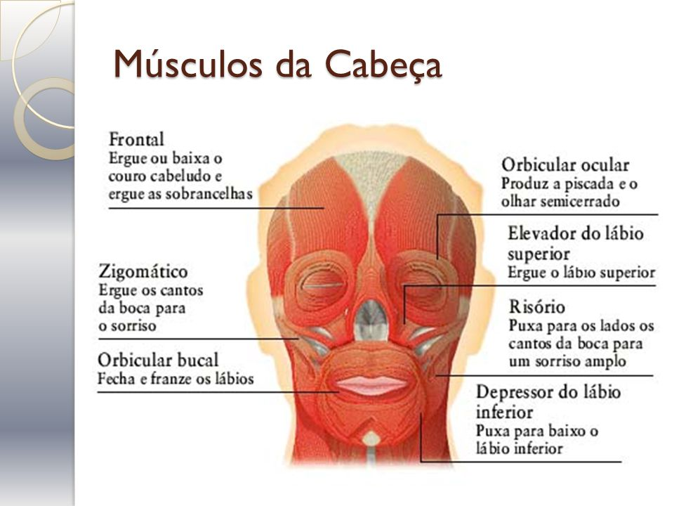 Músculos da Cabeça