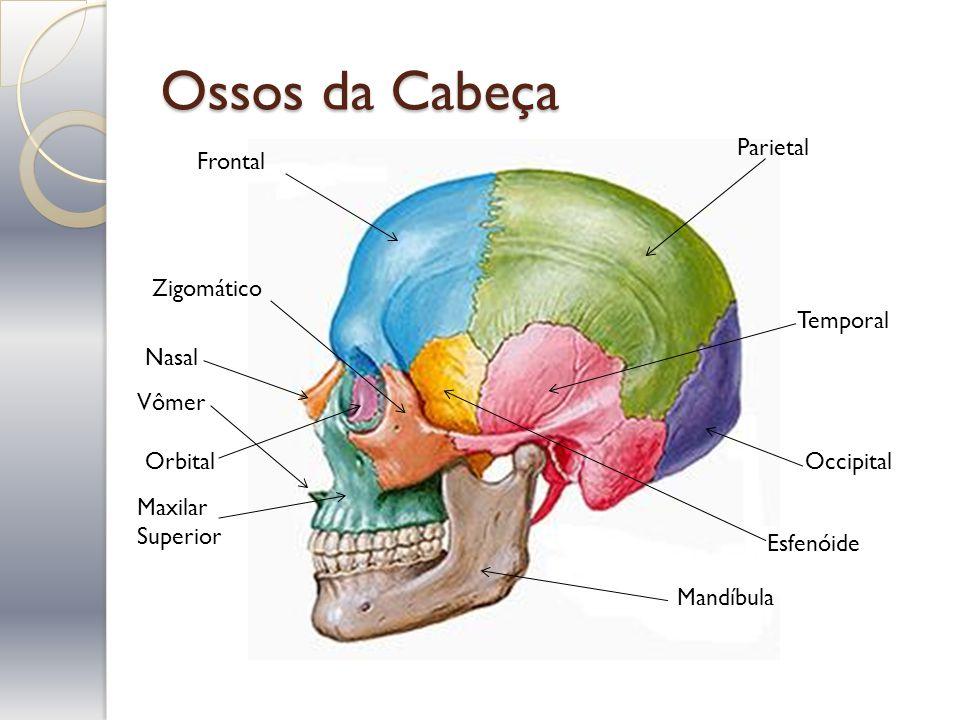 Ossos da Cabeça Parietal Frontal Zigomático Temporal Nasal Vômer