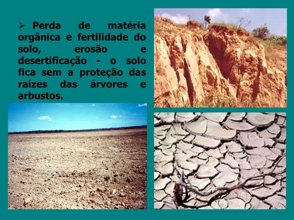 Perda de matéria orgânica e fertilidade do solo, erosão e desertificação - o solo fica sem a proteção das raízes das árvores e arbustos.