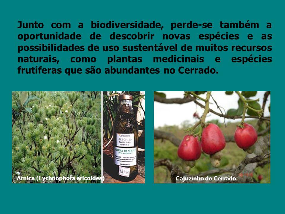 Junto com a biodiversidade, perde-se também a oportunidade de descobrir novas espécies e as possibilidades de uso sustentável de muitos recursos naturais, como plantas medicinais e espécies frutíferas que são abundantes no Cerrado.
