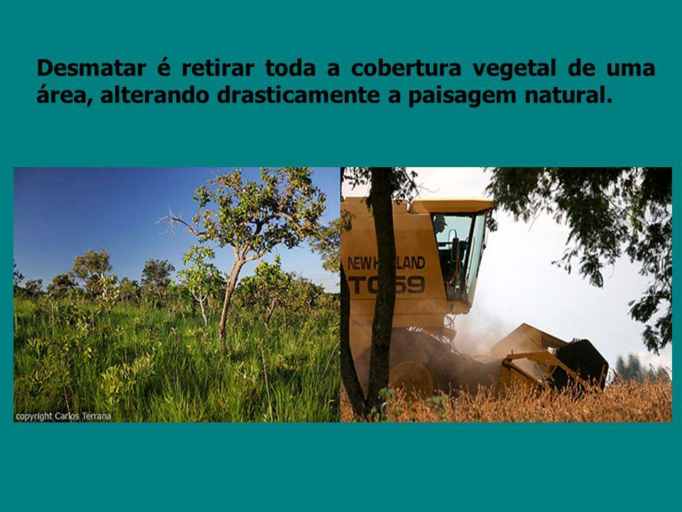 Desmatar é retirar toda a cobertura vegetal de uma área, alterando drasticamente a paisagem natural.