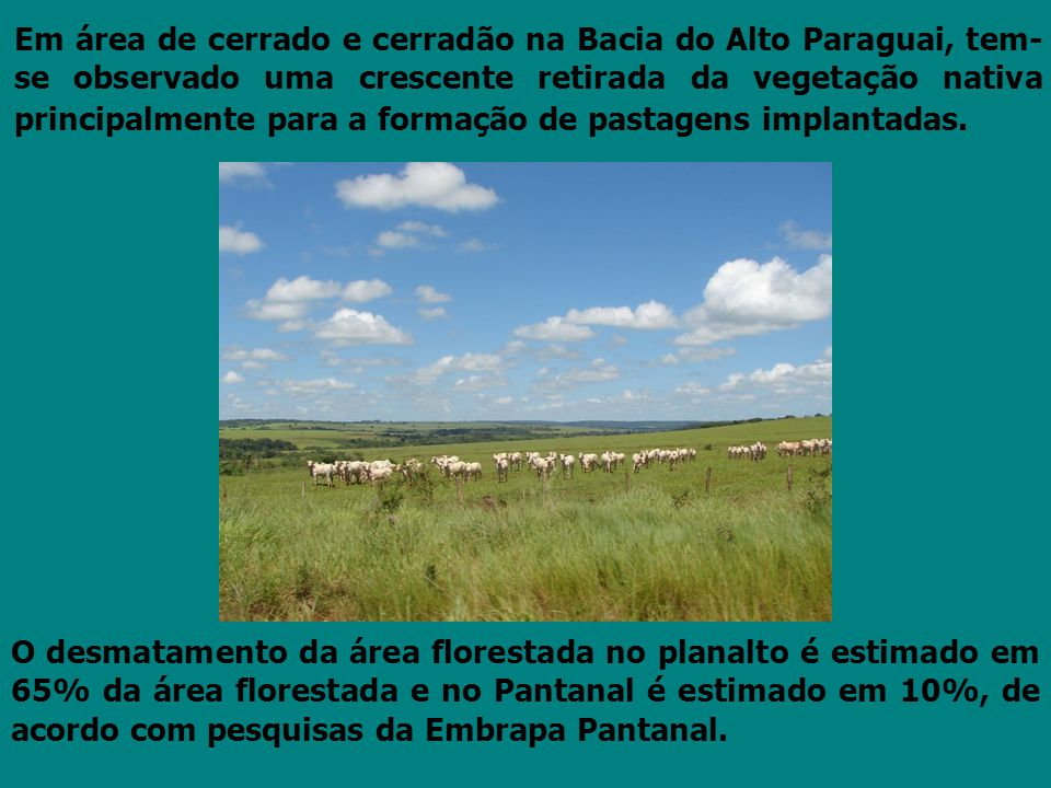 Em área de cerrado e cerradão na Bacia do Alto Paraguai, tem-se observado uma crescente retirada da vegetação nativa principalmente para a formação de pastagens implantadas.