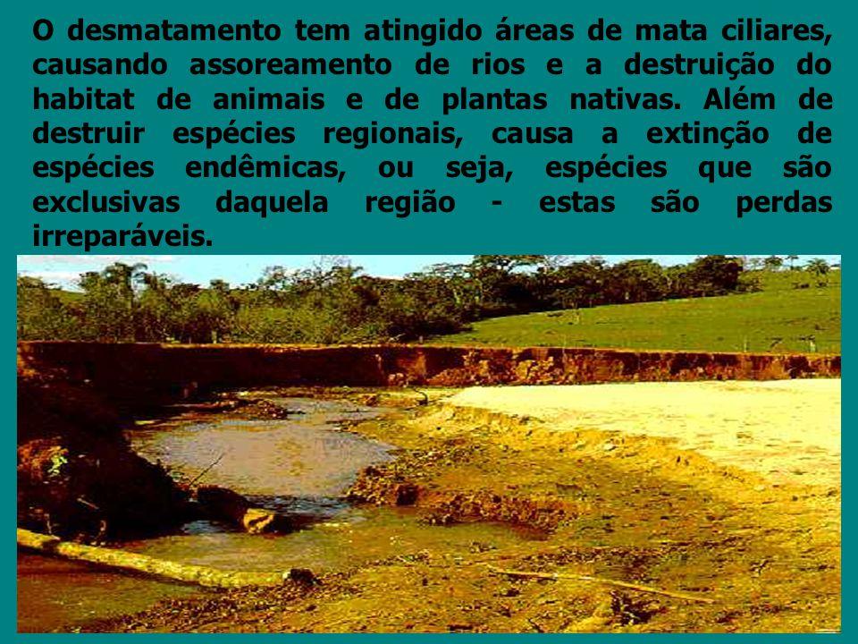 O desmatamento tem atingido áreas de mata ciliares, causando assoreamento de rios e a destruição do habitat de animais e de plantas nativas.