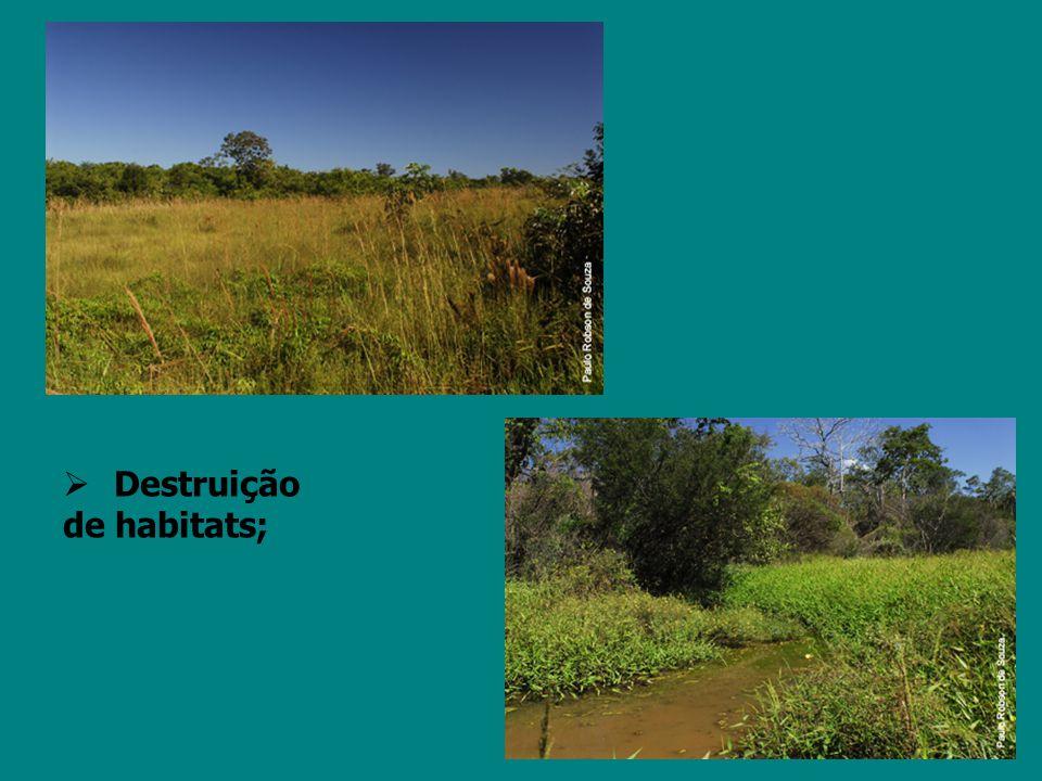 Destruição de habitats;
