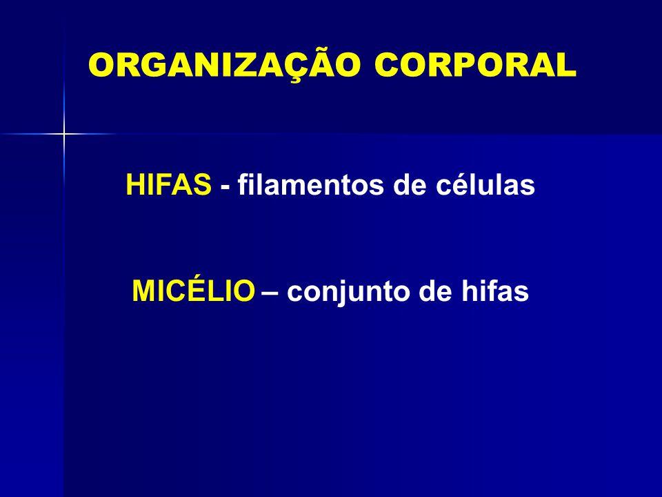 HIFAS - filamentos de células MICÉLIO – conjunto de hifas