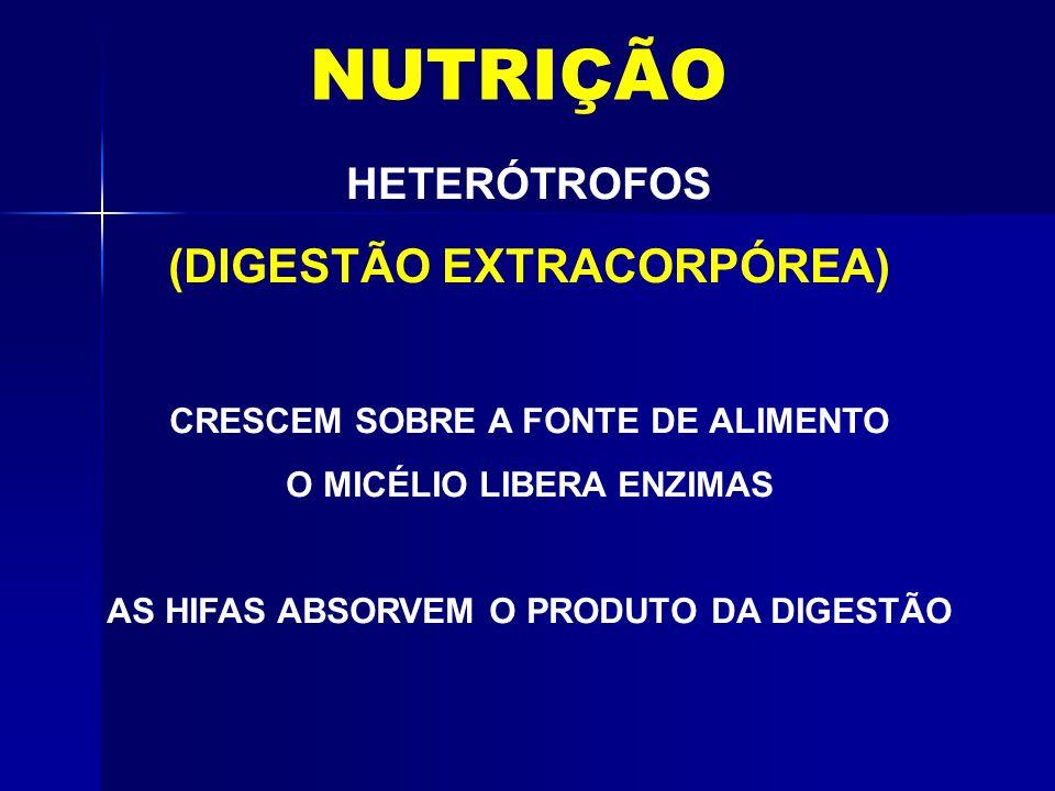 NUTRIÇÃO (DIGESTÃO EXTRACORPÓREA) HETERÓTROFOS