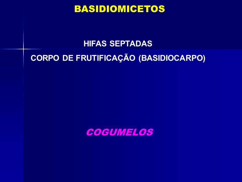 CORPO DE FRUTIFICAÇÃO (BASIDIOCARPO)