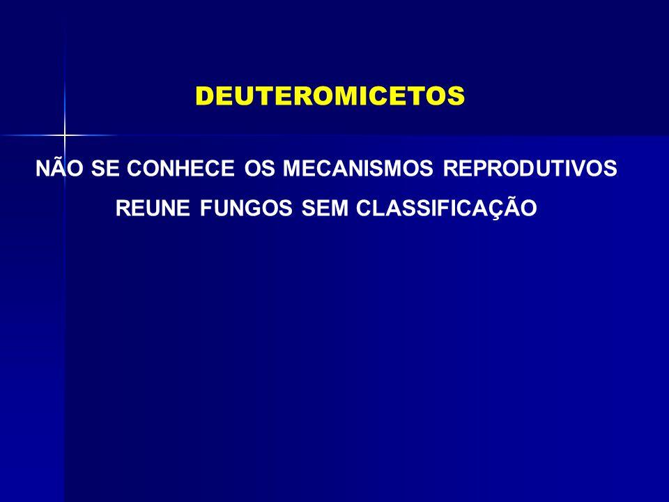 DEUTEROMICETOS NÃO SE CONHECE OS MECANISMOS REPRODUTIVOS