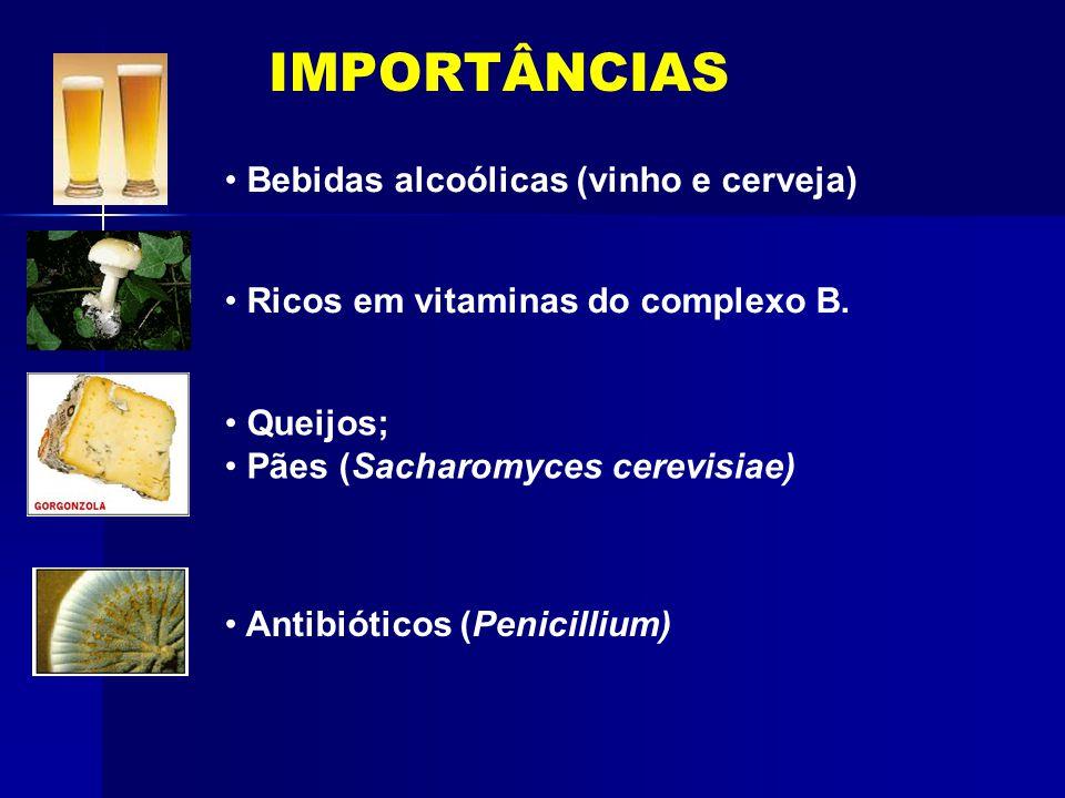 IMPORTÂNCIAS Bebidas alcoólicas (vinho e cerveja)