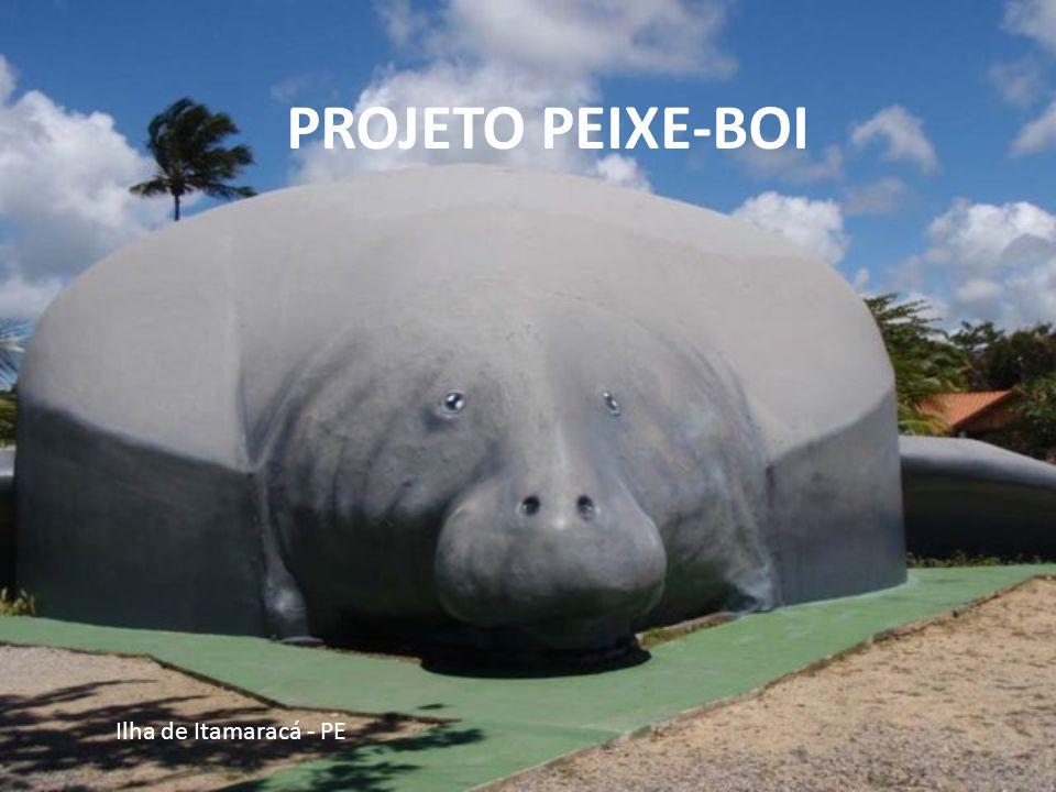 PROJETO PEIXE-BOI Ilha de Itamaracá - PE