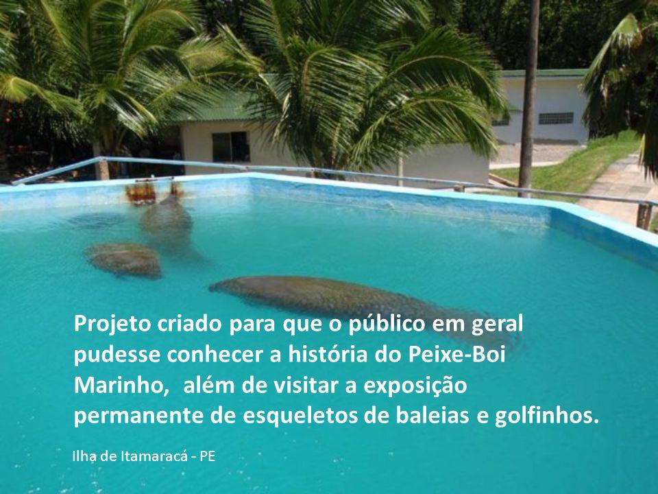 Projeto criado para que o público em geral pudesse conhecer a história do Peixe-Boi Marinho, além de visitar a exposição permanente de esqueletos de baleias e golfinhos.