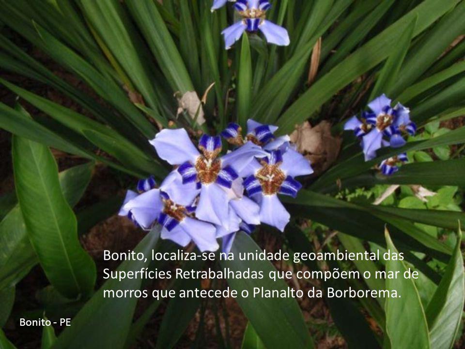 Bonito, localiza-se na unidade geoambiental das Superfícies Retrabalhadas que compõem o mar de morros que antecede o Planalto da Borborema.