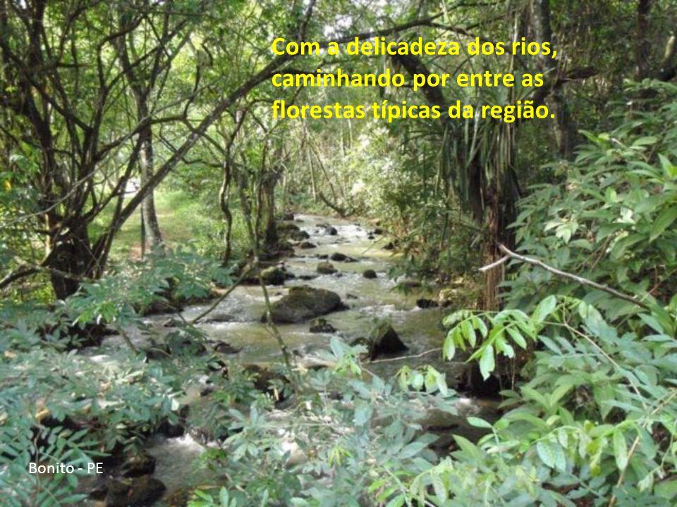 Com a delicadeza dos rios, caminhando por entre as florestas típicas da região.