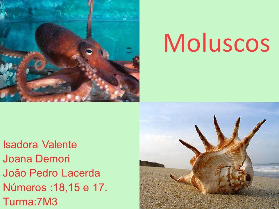 Moluscos Isadora Valente Joana Demori João Pedro Lacerda