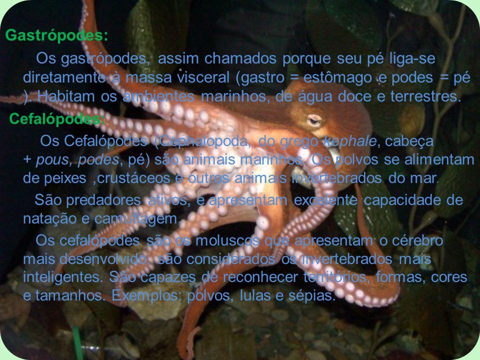 Gastrópodes: