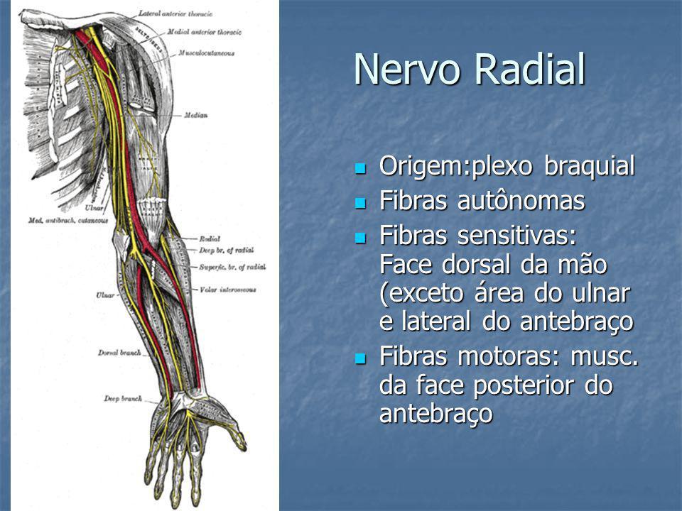 Nervo Radial Origem:plexo braquial Fibras autônomas