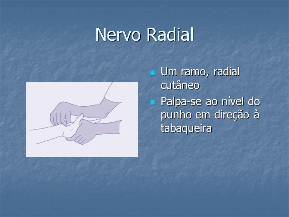 Nervo Radial Um ramo, radial cutâneo