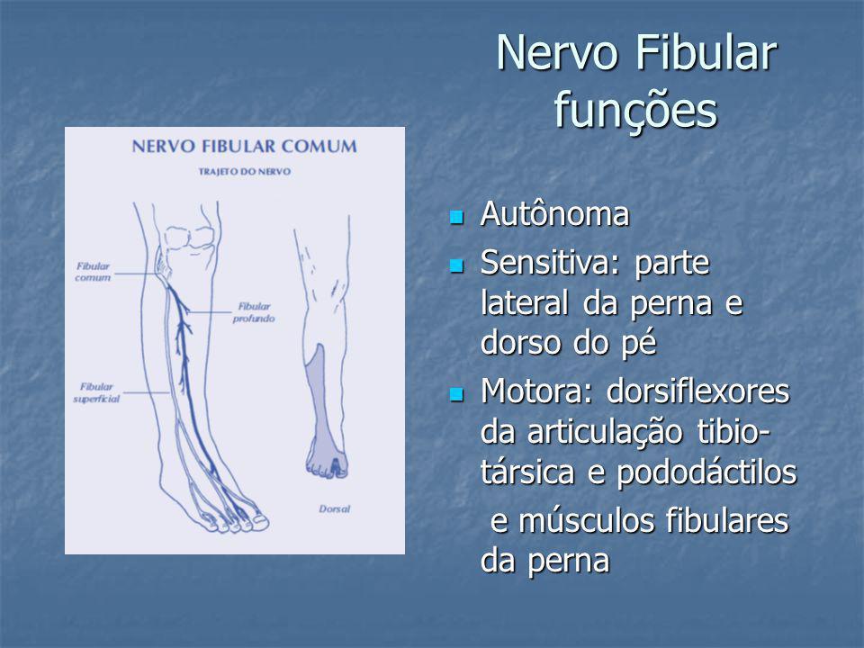 Nervo Fibular funções Autônoma