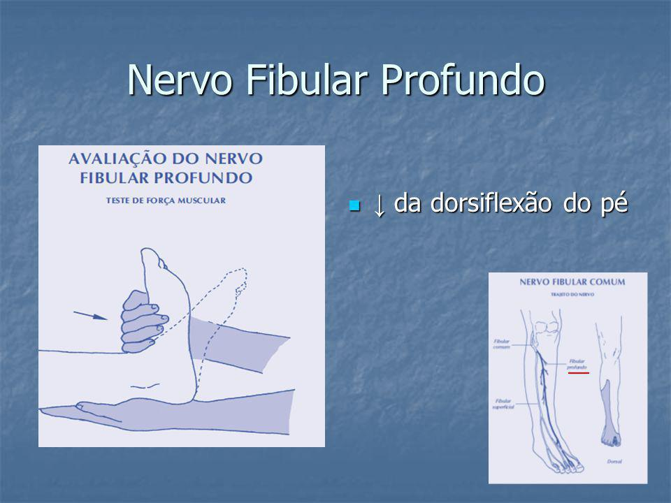 Nervo Fibular Profundo