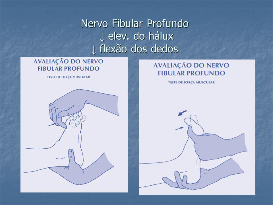 Nervo Fibular Profundo ↓ elev. do hálux ↓ flexão dos dedos