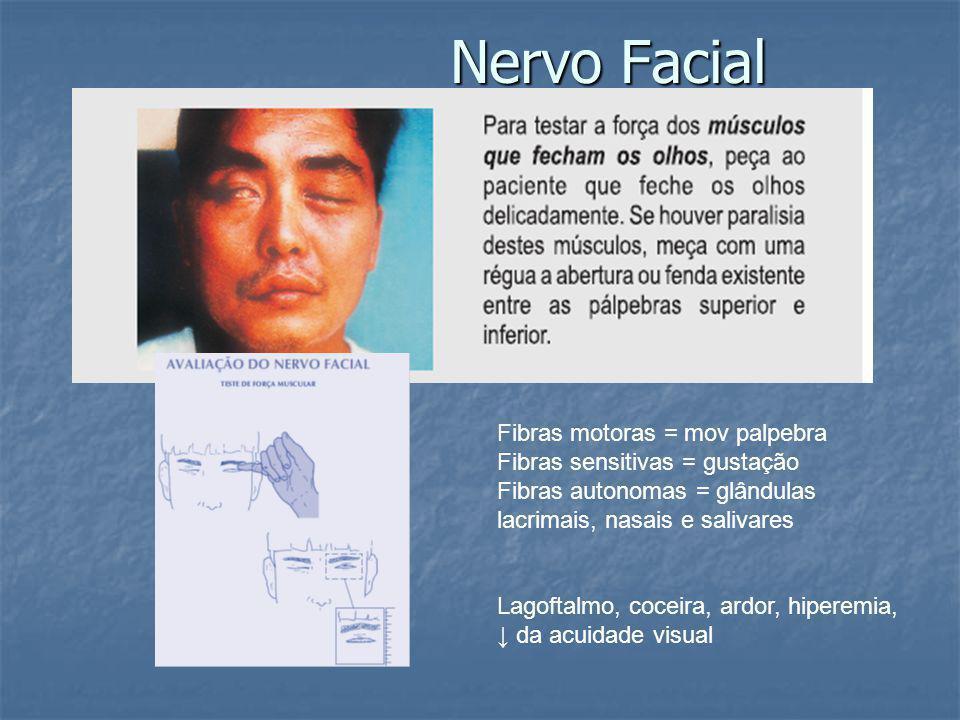 Nervo Facial Fibras motoras = mov palpebra