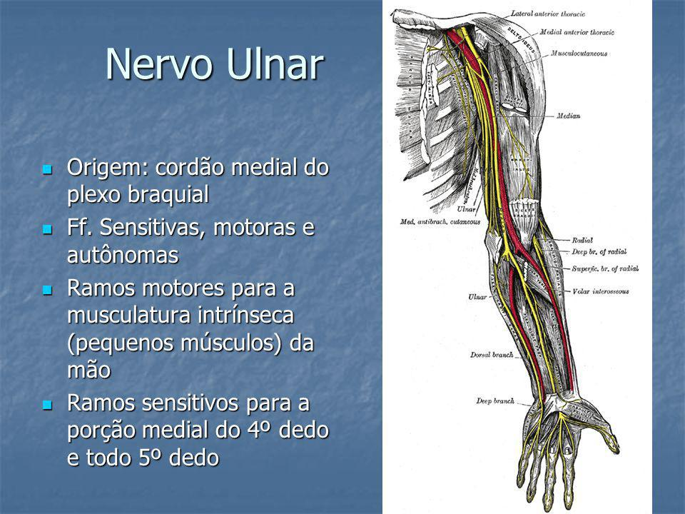 Nervo Ulnar Origem: cordão medial do plexo braquial