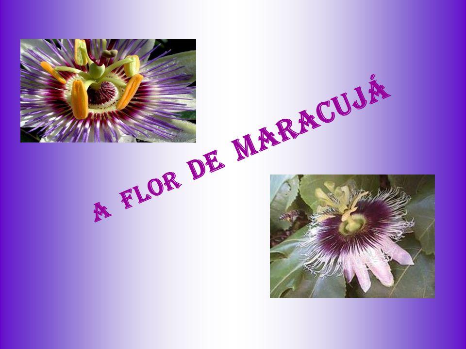A FLOR DE MARACUJÁ