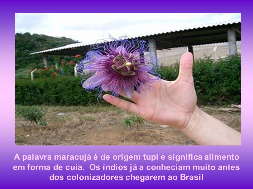 A palavra maracujá é de origem tupi e significa alimento