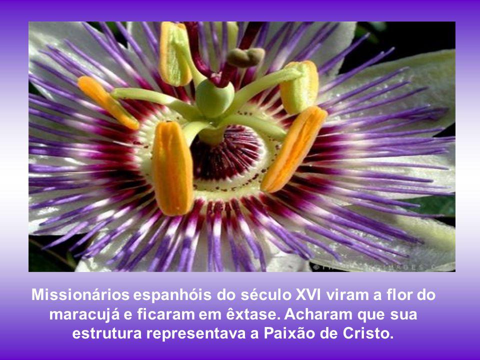Missionários espanhóis do século XVI viram a flor do