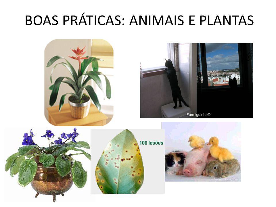 BOAS PRÁTICAS: ANIMAIS E PLANTAS