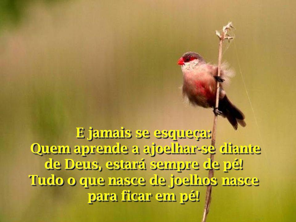 Quem aprende a ajoelhar-se diante de Deus, estará sempre de pé!