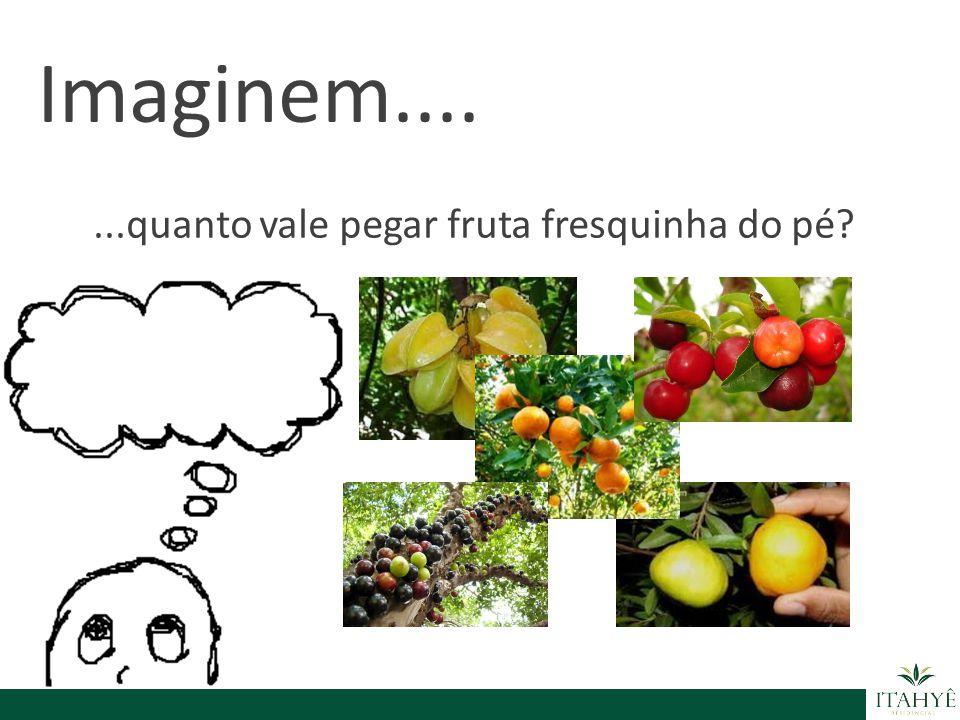 Imaginem.... ...quanto vale pegar fruta fresquinha do pé
