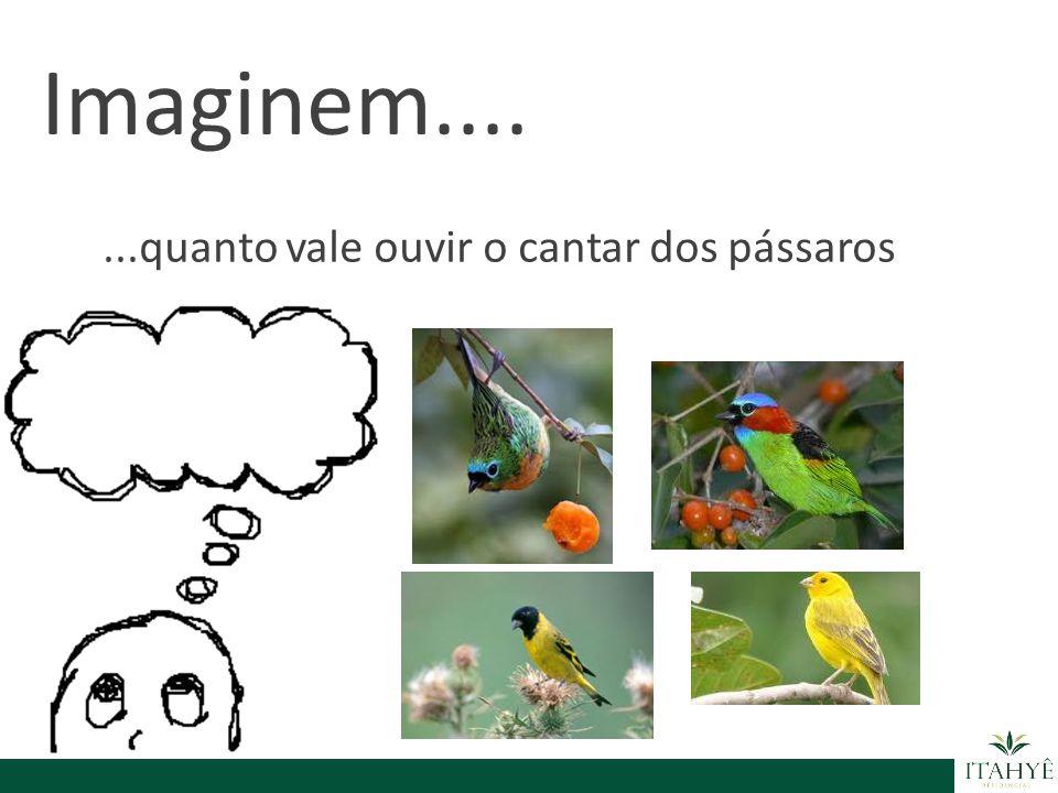 Imaginem.... ...quanto vale ouvir o cantar dos pássaros