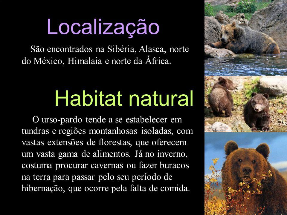 Localização São encontrados na Sibéria, Alasca, norte do México, Himalaia e norte da África. Habitat natural.