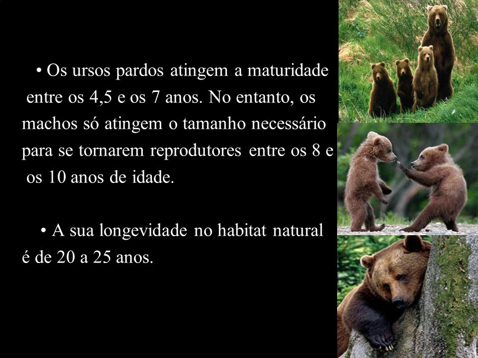 • Os ursos pardos atingem a maturidade