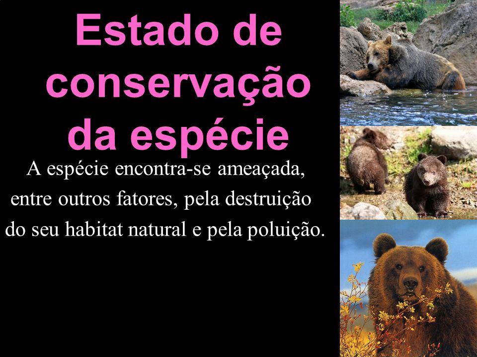 Estado de conservação da espécie