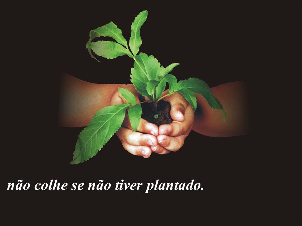 não colhe se não tiver plantado.