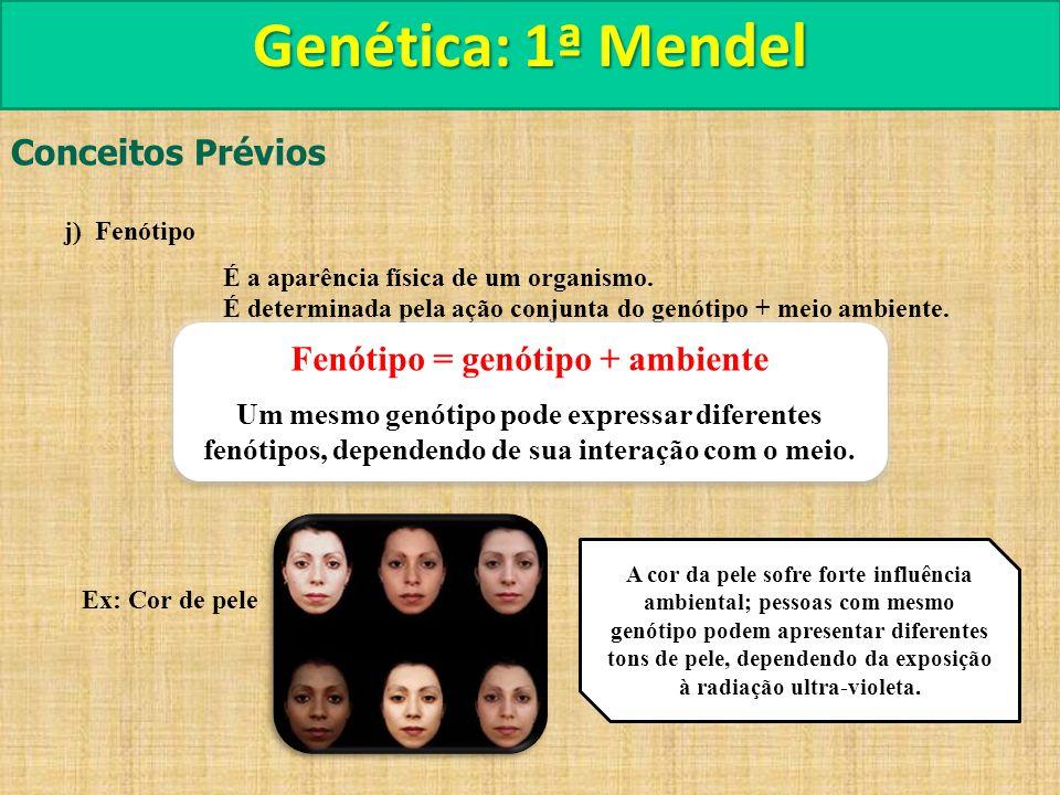 Fenótipo = genótipo + ambiente