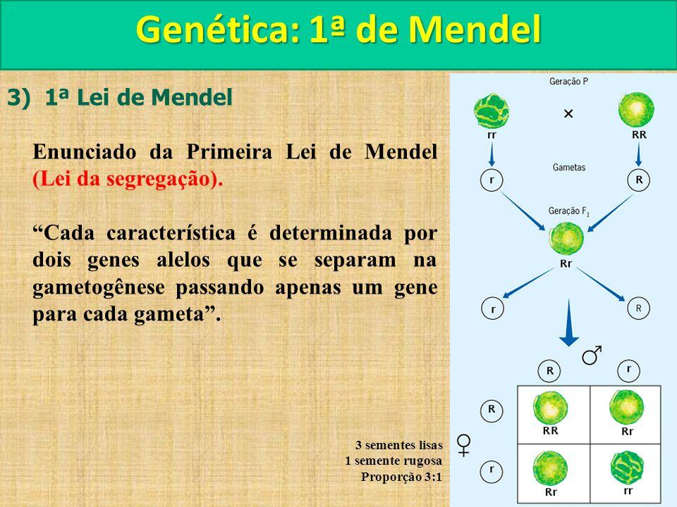 Genética: 1ª de Mendel 3) 1ª Lei de Mendel