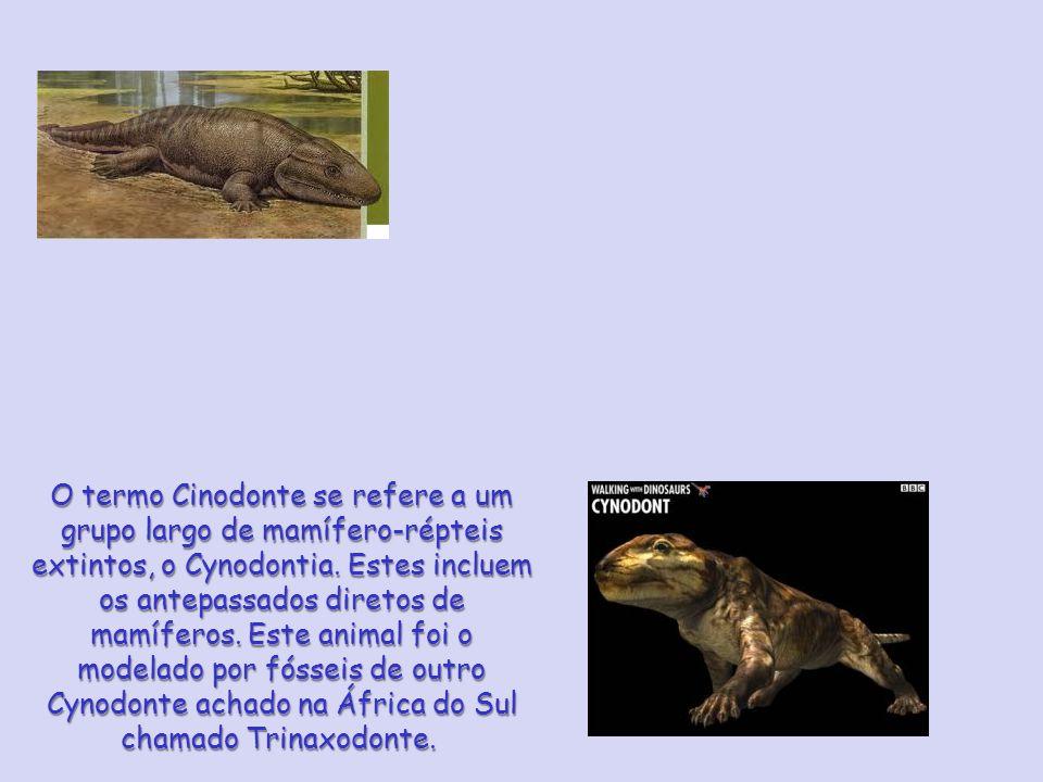 O termo Cinodonte se refere a um grupo largo de mamífero-répteis extintos, o Cynodontia.