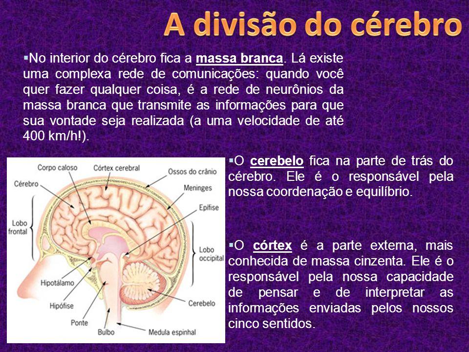 A divisão do cérebro