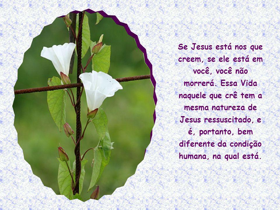Se Jesus está nos que creem, se ele está em você, você não morrerá