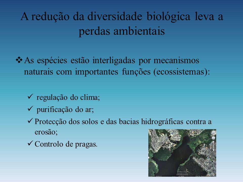 A redução da diversidade biológica leva a perdas ambientais