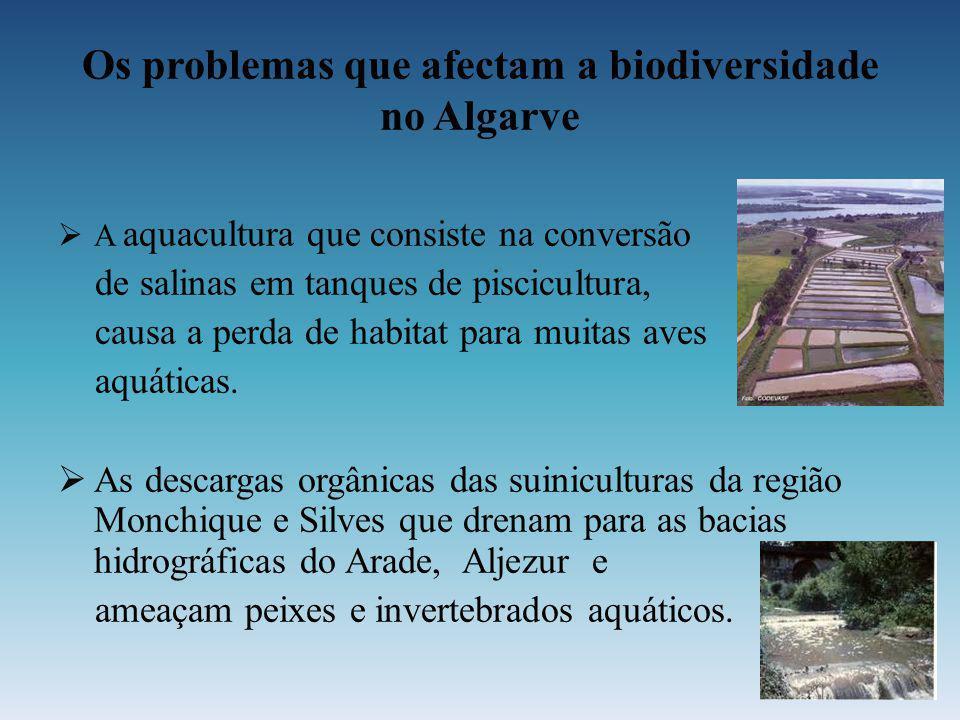 Os problemas que afectam a biodiversidade no Algarve
