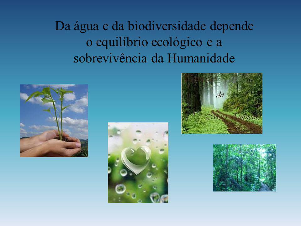 Da água e da biodiversidade depende o equilíbrio ecológico e a sobrevivência da Humanidade