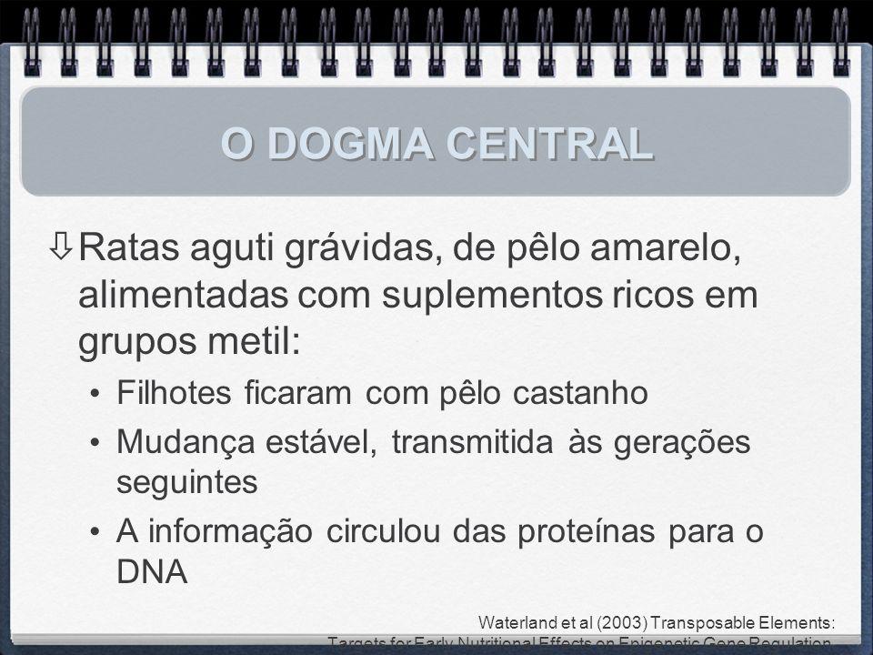 O DOGMA CENTRAL Ratas aguti grávidas, de pêlo amarelo, alimentadas com suplementos ricos em grupos metil: