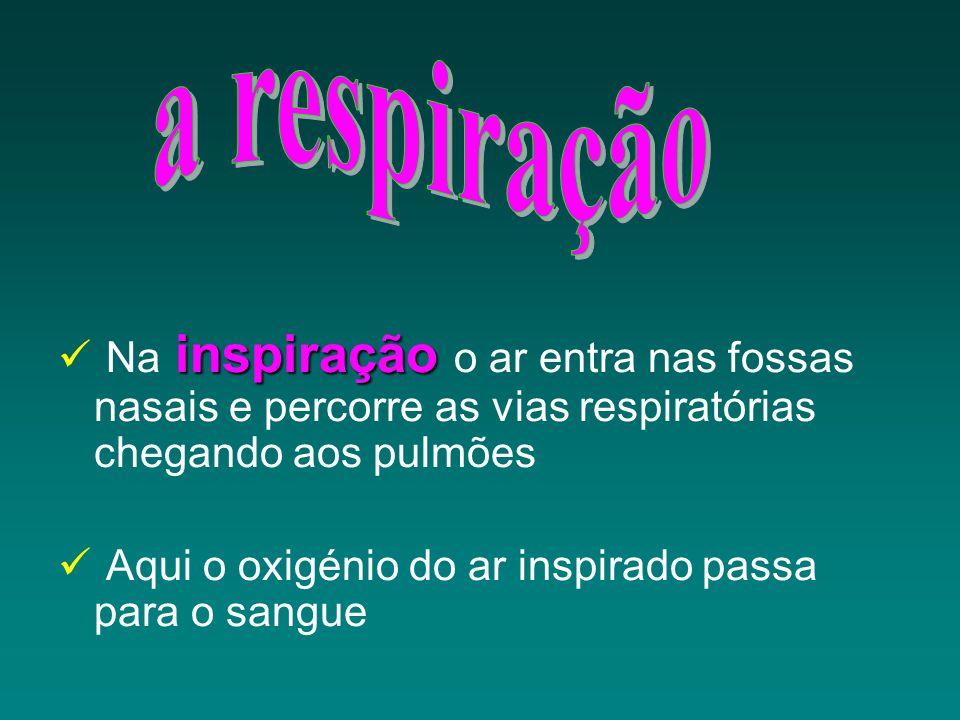 a respiração Na inspiração o ar entra nas fossas nasais e percorre as vias respiratórias chegando aos pulmões.